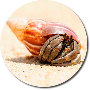Crustaceo_r